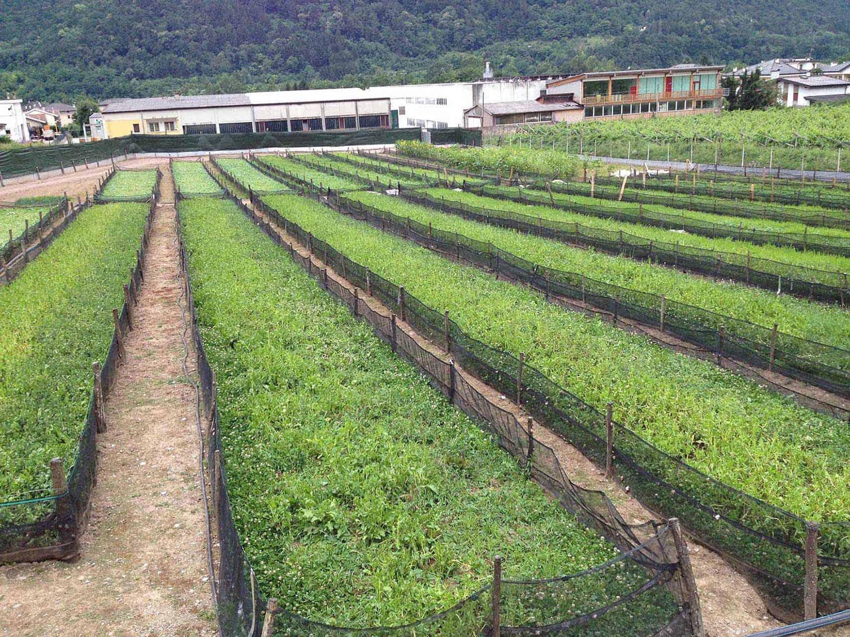 allevamenti di lumache