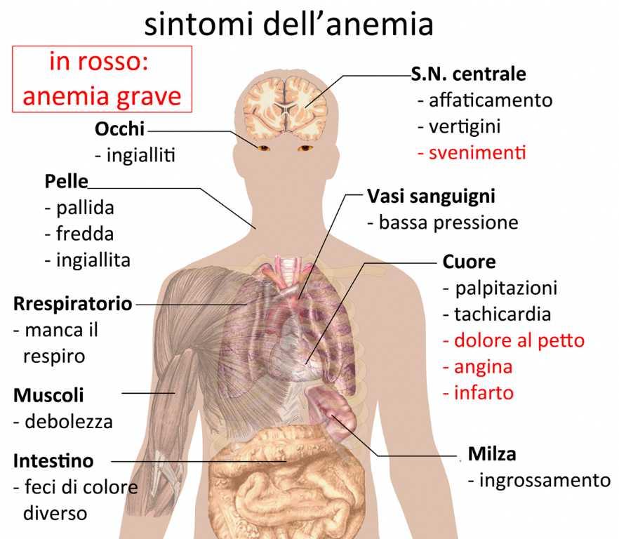 anemia mediterranea cosa è