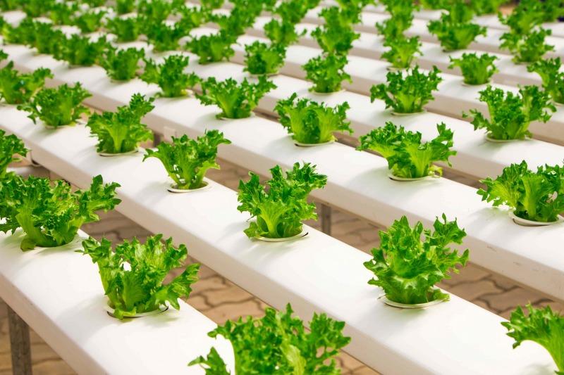 coltivazione-aeroponica_800x533